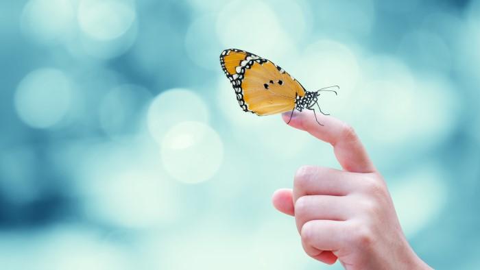 beautiful-yellow-butterfly