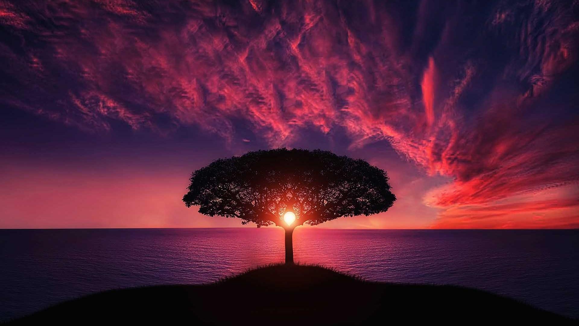 Sunset-behind-Tree
